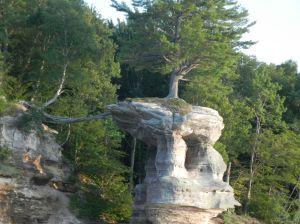 PR Tree1