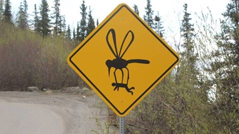 Mosquitos Sign
